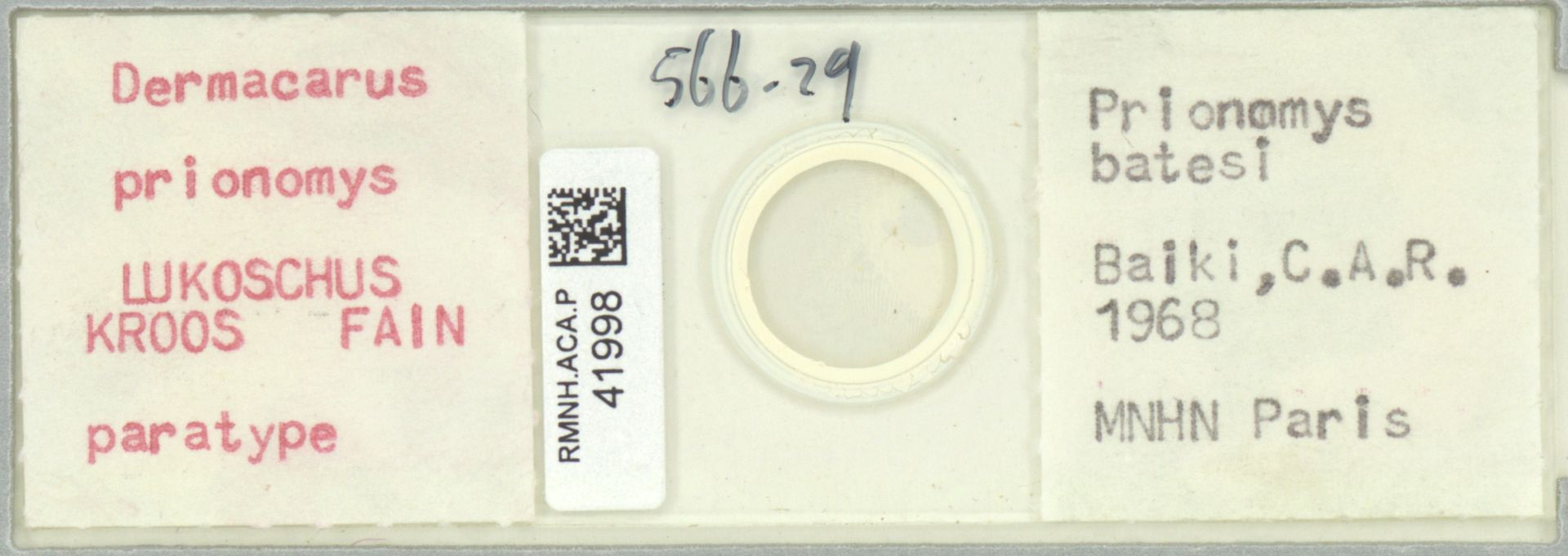 RMNH.ACA.P.41998 | Dermacarus prionomys Lukoschus Kroos Fain