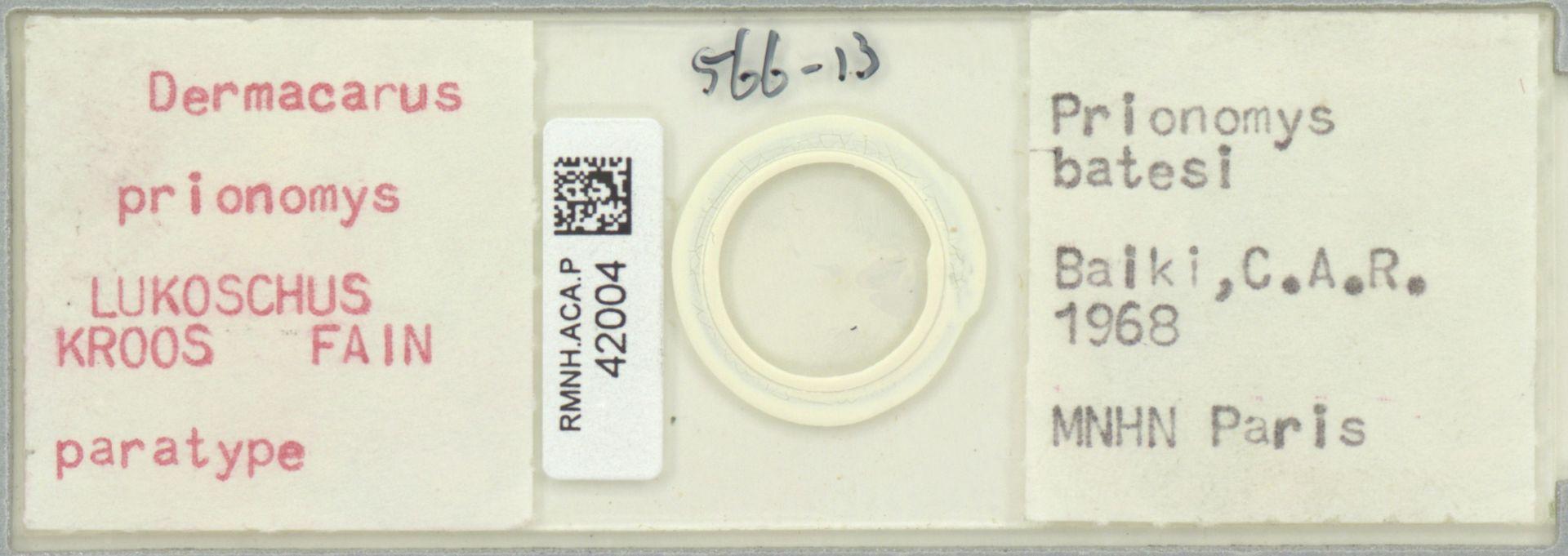 RMNH.ACA.P.42004 | Dermacarus prionomys LUKOSCHUS KROOS FAIN