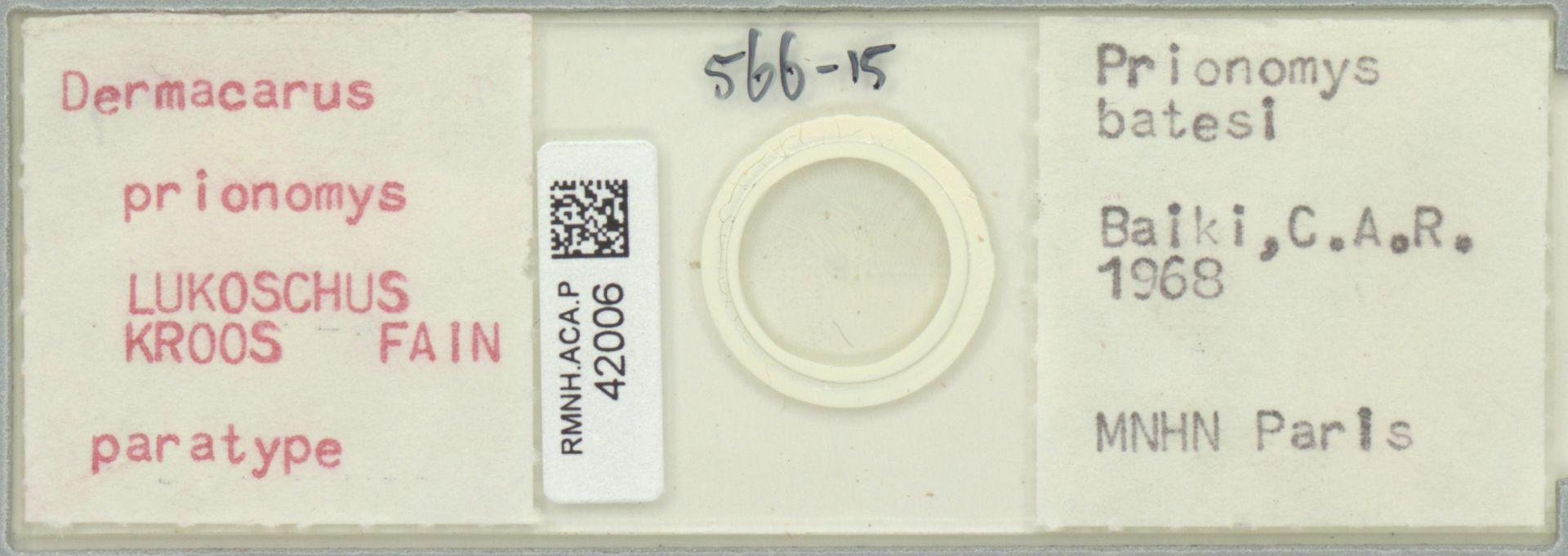 RMNH.ACA.P.42006 | Dermacarus prionomys LUKOSCHUS KROOS FAIN