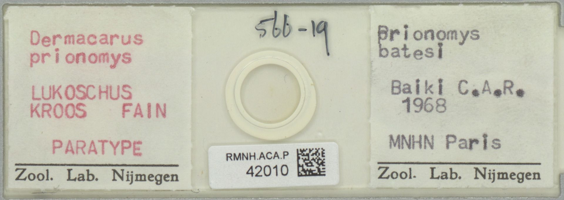 RMNH.ACA.P.42010 | Dermacarus prionomys Lukoschus Kroos Fain
