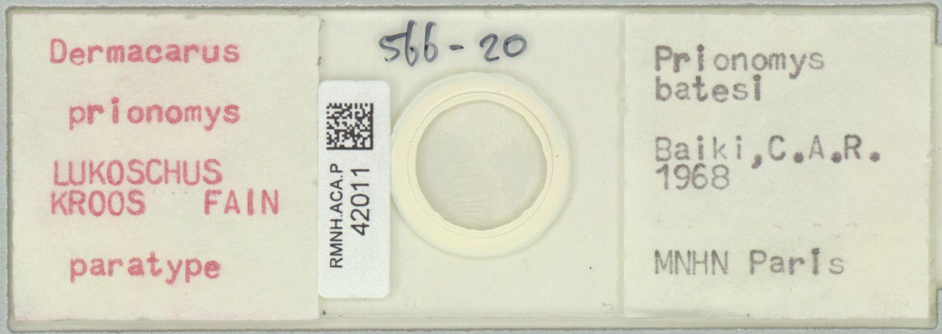 RMNH.ACA.P.42011 | Dermacarus prionomys Lukoschus Kroos Fain