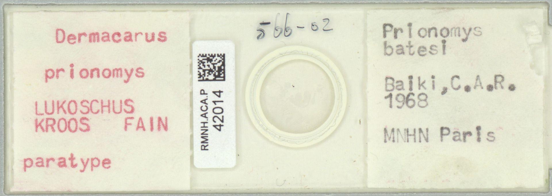 RMNH.ACA.P.42014   Dermacarus prionomys LUKOSCHUS KROOS FAIN