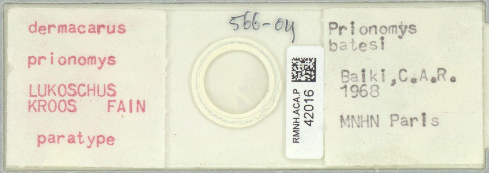 RMNH.ACA.P.42016   Dermacarus prionomys LUKOSCHUS KROOS FAIN