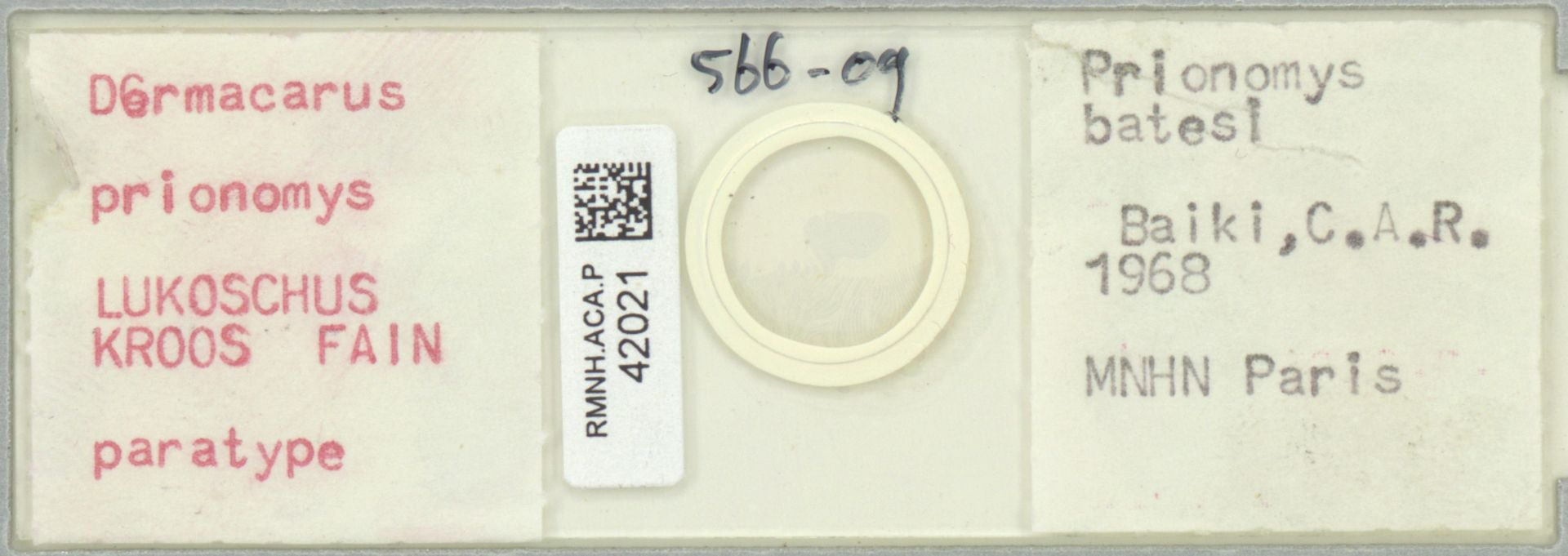 RMNH.ACA.P.42021   Dermacarus prionomys LUKOSCHUS KROOS FAIN