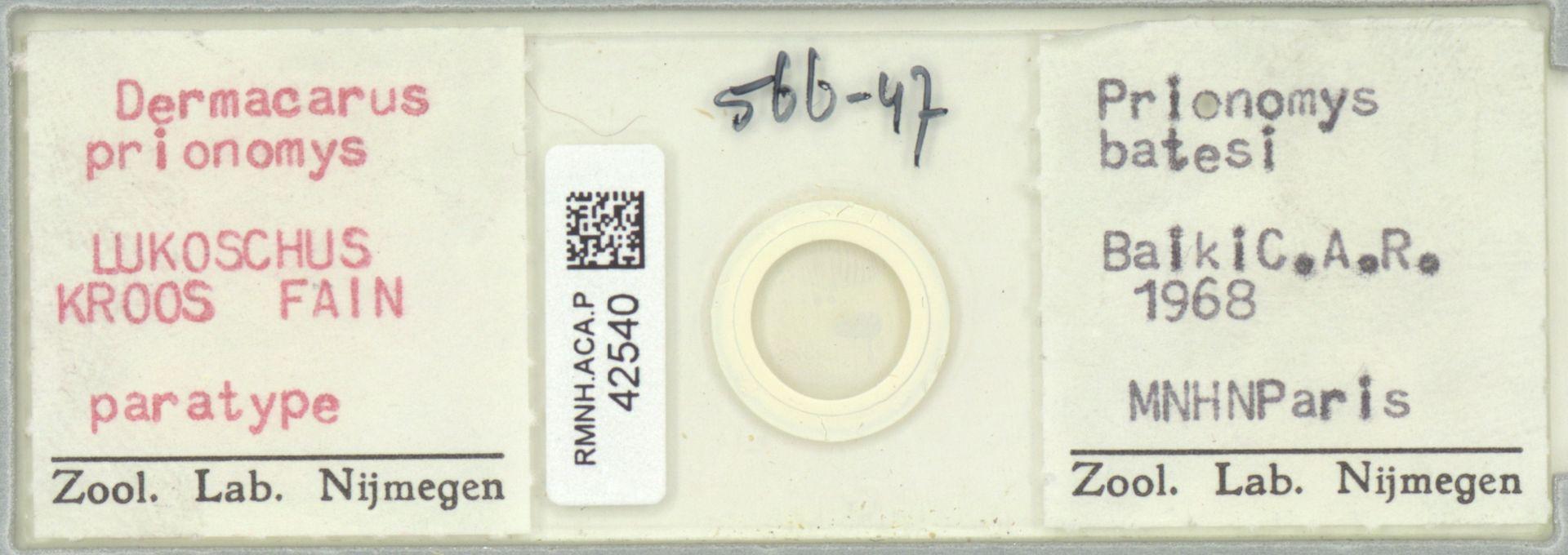 RMNH.ACA.P.42540 | Dermacarus prionomys Lukoschus, Kroos, Fain