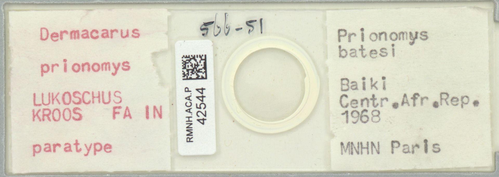RMNH.ACA.P.42544 | Dermacarus prionomys Lukoschus Kroos Fain