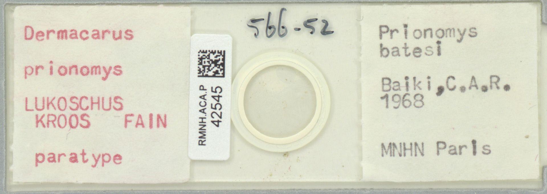 RMNH.ACA.P.42545 | Dermacarus prionomys Lukoschus, Kroos, Fain