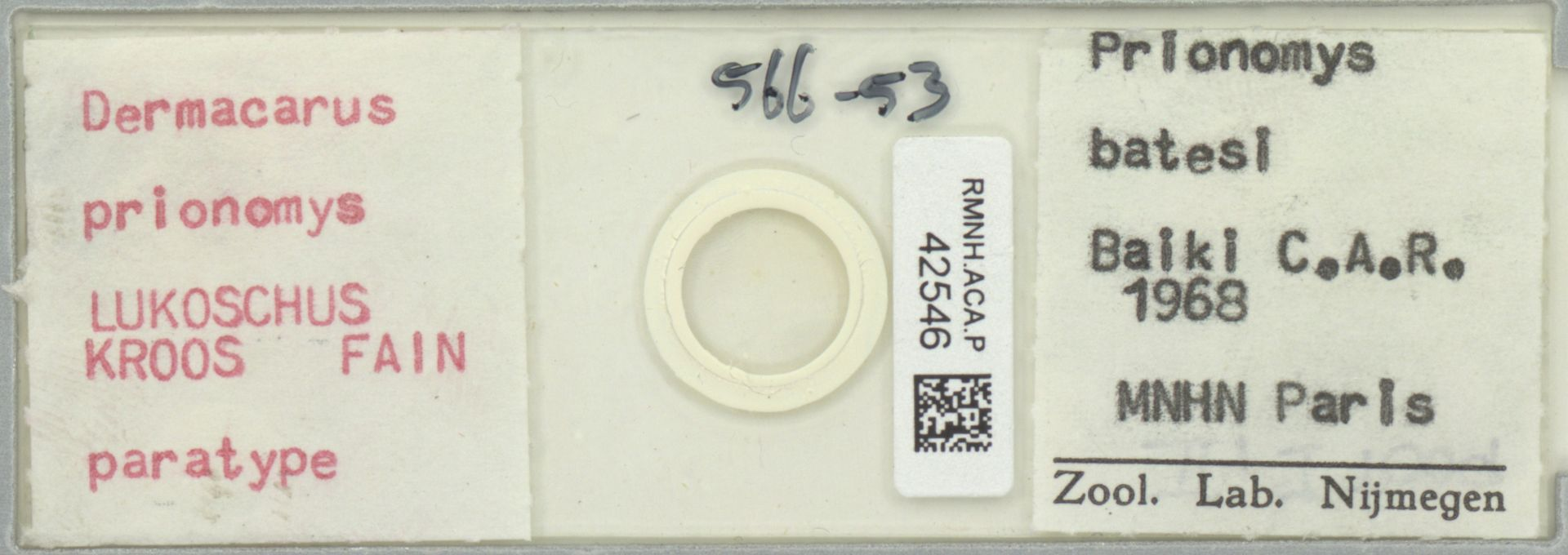 RMNH.ACA.P.42546   Dermacarus prionomys Lukoschus, Kroos & Fain