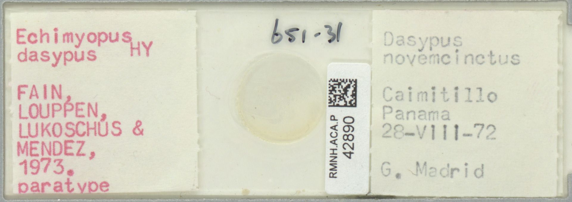 RMNH.ACA.P.42890 | Echimyopus dasypus Fain, Louppen, Lukoschus & Mendez 1973