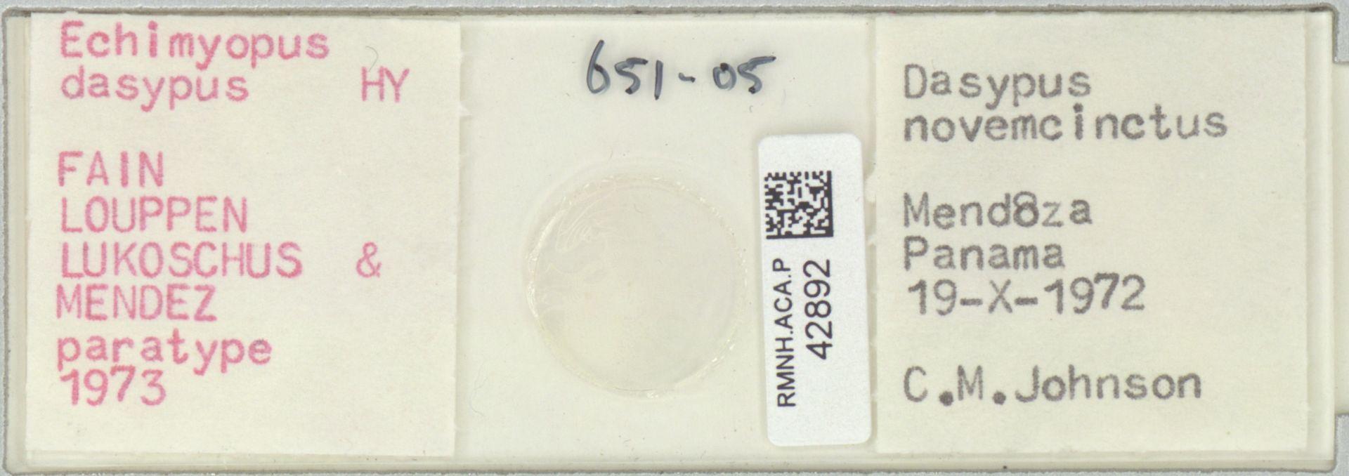 RMNH.ACA.P.42892 | Echimyopus dasypus Fain, Louppen, Lukoschus & Mendez