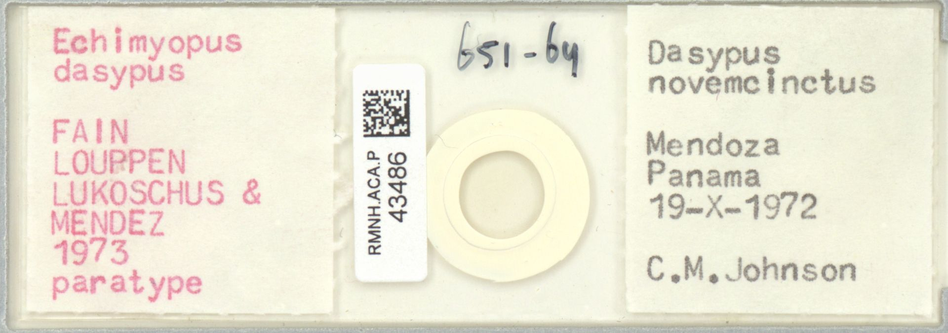 RMNH.ACA.P.43486 | Echimyopus dasypus Fain, Louppen Lukoschus & Mendez 1973