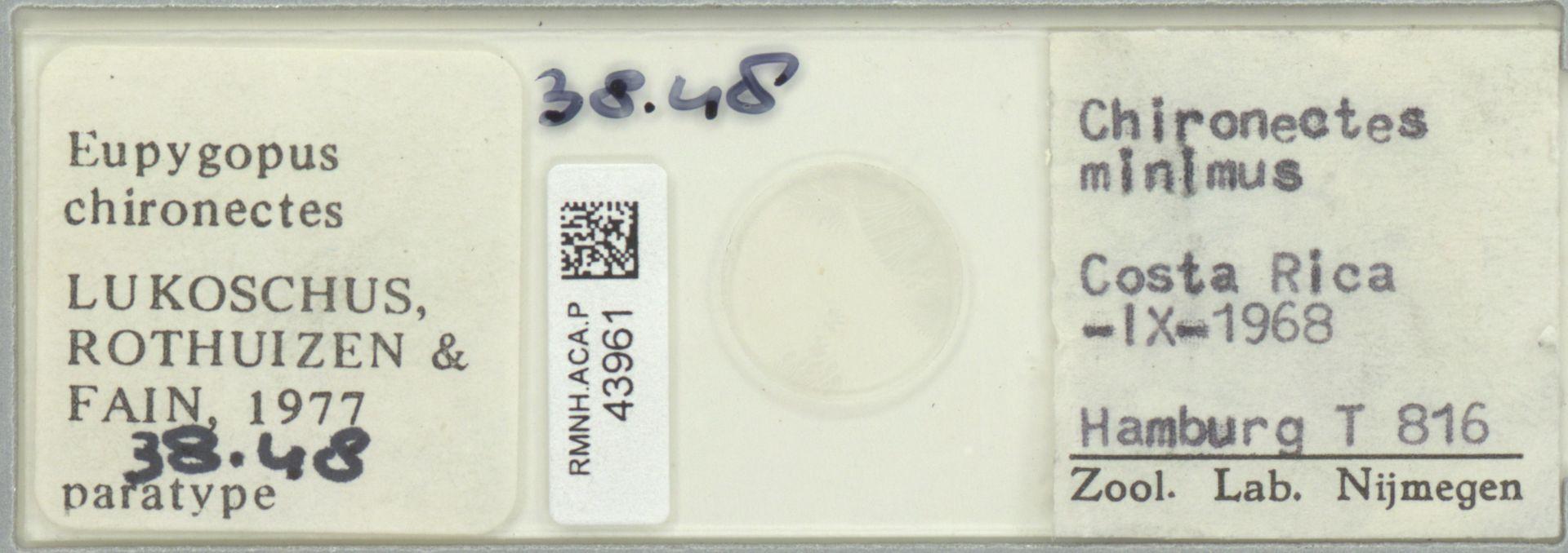 RMNH.ACA.P.43961 | Eupygopus chironectes Lukoschus, Rothuizen & Fain, 1977