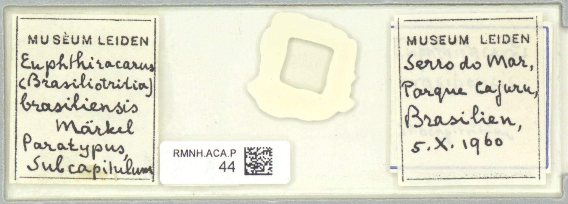 RMNH.ACA.P.44   Euphthiracarus brasiliensis Märkel