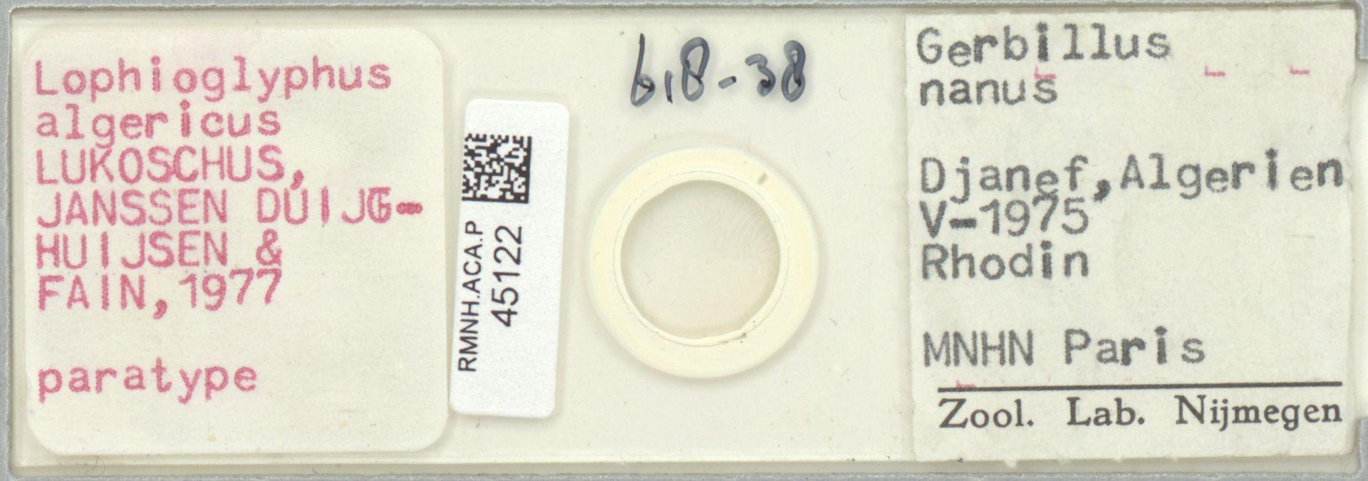 RMNH.ACA.P.45122 | Lophioglyphus algericus Lukoschus, Janssen Duijghuijsen & Fain, 1977