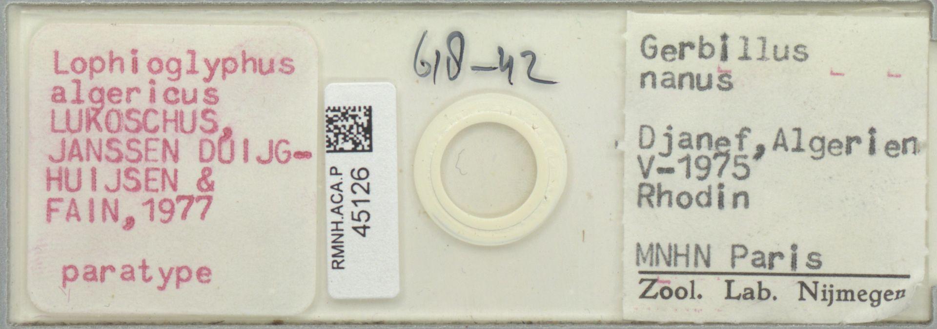 RMNH.ACA.P.45126 | Lophioglyphus algericus Lukoschus, Janssen Duijghuijsen & Fain, 1977