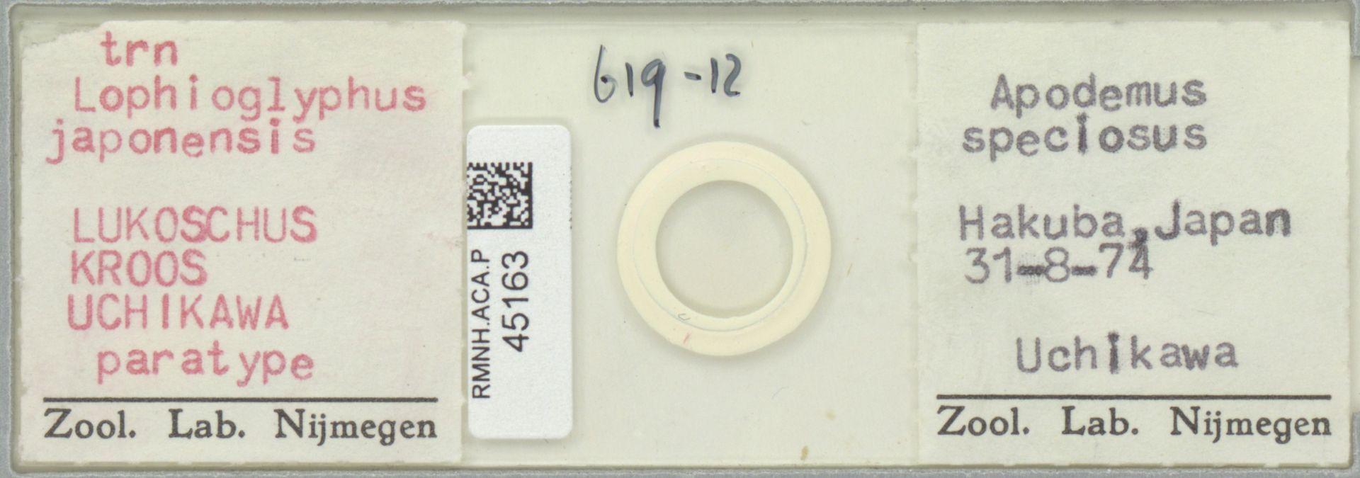RMNH.ACA.P.45163 | Lophioglyphus japonensis Lukoschus Kroos Uchikawa