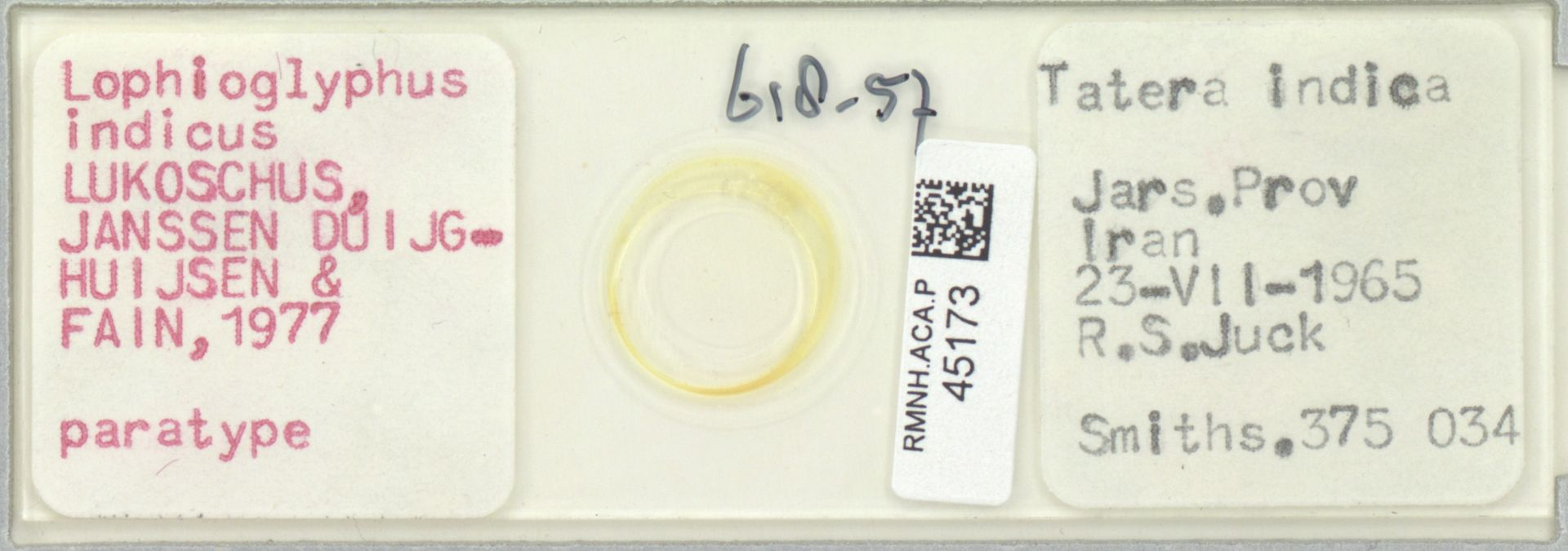 RMNH.ACA.P.45173 | Lophioglyphus indicus Lukoschus, Janssen Duijghuijsen & Fain, 1977