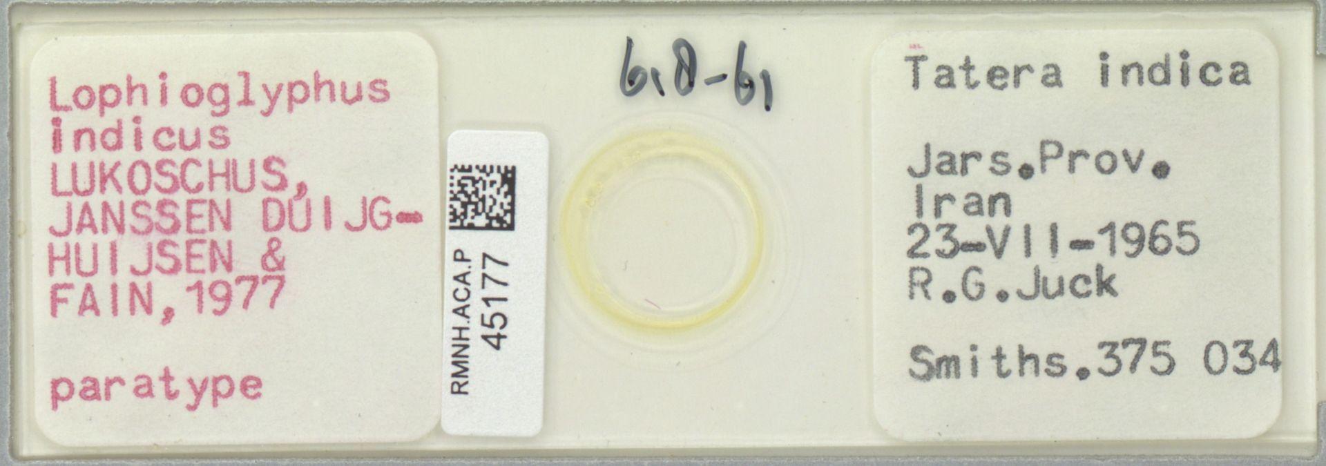 RMNH.ACA.P.45177 | Lophioglyphus indicus Lukoschus, Janssen Duijghuijsen & Fain, 1977