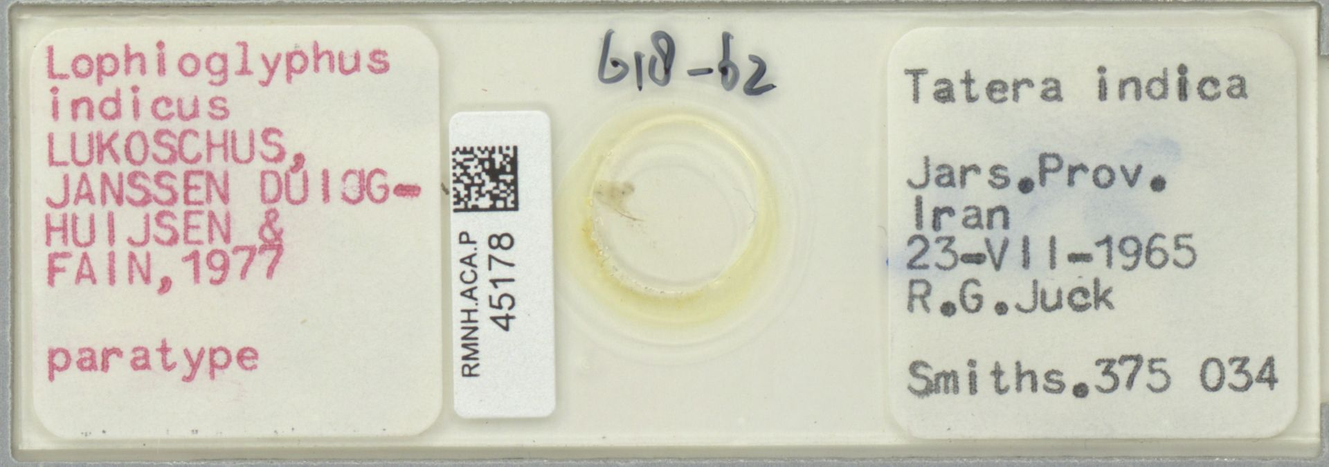 RMNH.ACA.P.45178 | Lophioglyphus indicus Lukoschus, Janssen Duijghuijsen & Fain, 1977