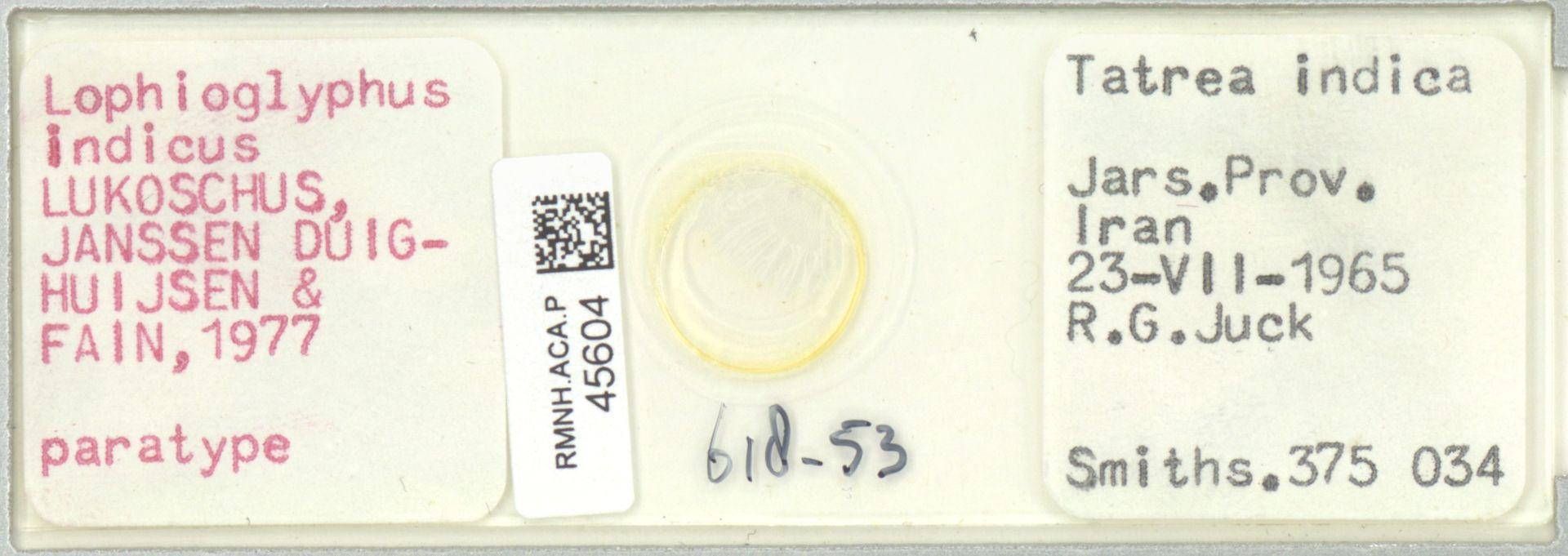 RMNH.ACA.P.45604 | Lophioglyphus indicus Lukoschus, Janssen Duijghuijsen & Fain, 1977