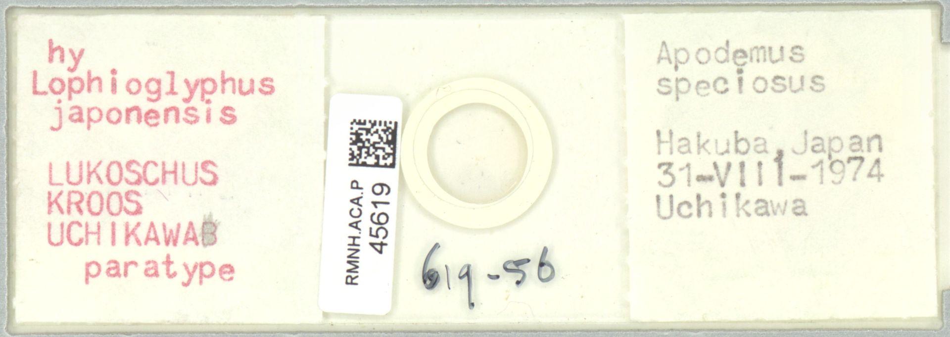 RMNH.ACA.P.45619   Lophioglyphus japonensis Lukoschus Kroos Uchikawa