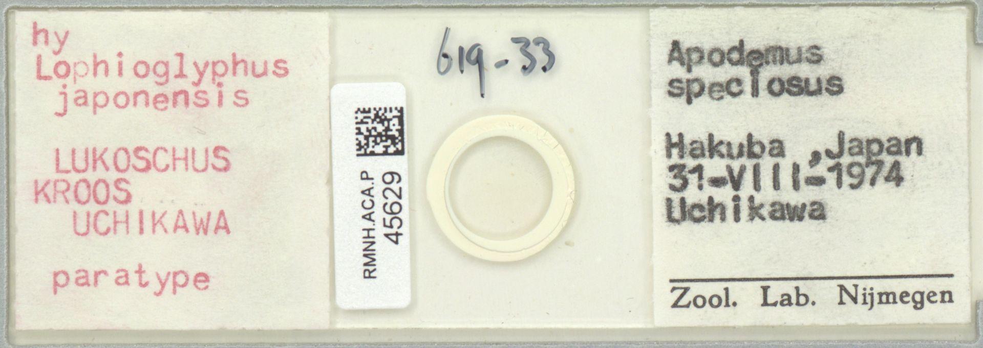 RMNH.ACA.P.45629 | Lophioglyphus japonensis Lukoschus, Kroos, Uchikawa