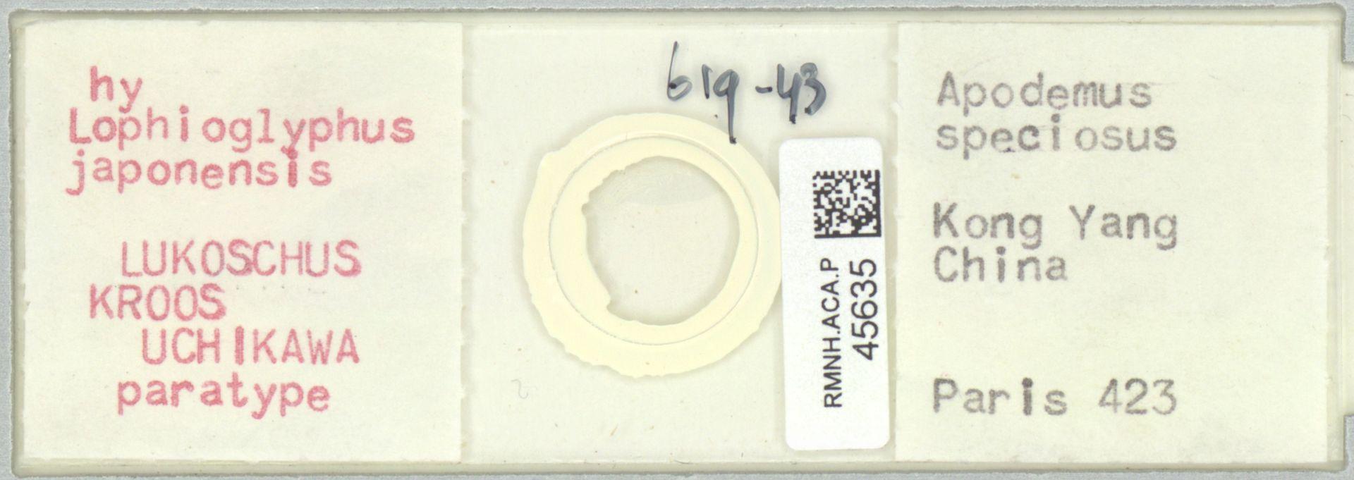 RMNH.ACA.P.45635   Lophioglyphus japonensis Lukoschus, Kroos, Uchikawa