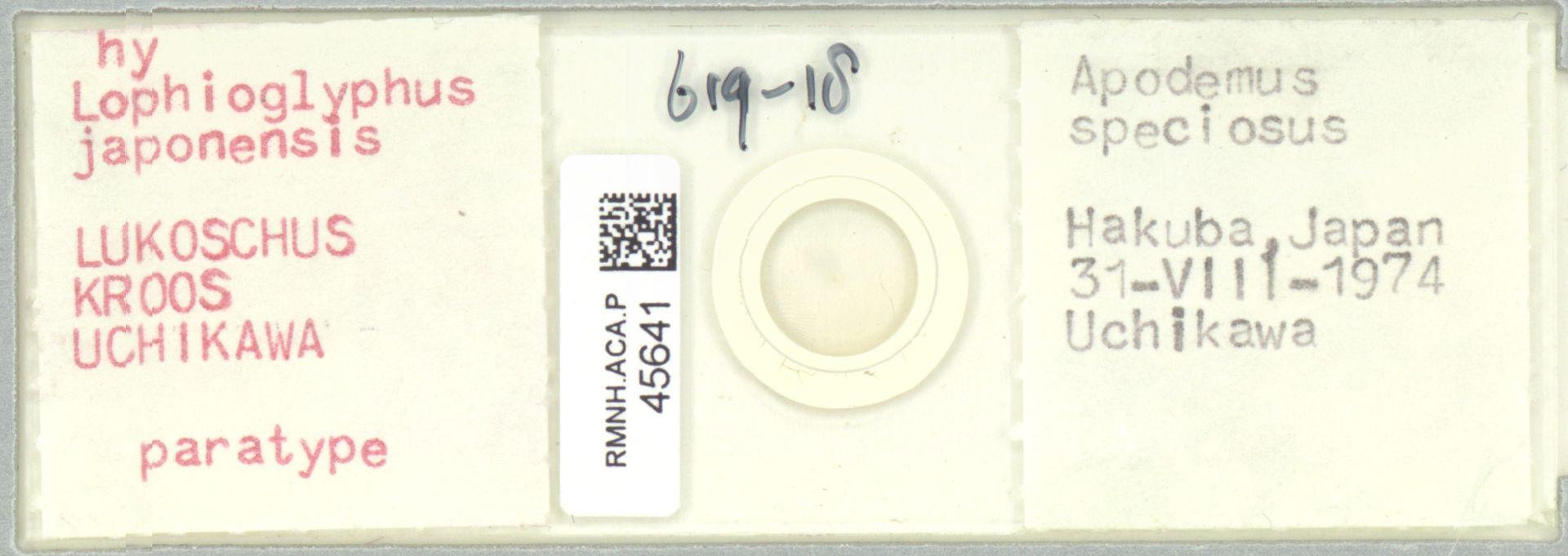 RMNH.ACA.P.45641 | Lophioglyphus japonensis Lukoschus, Kroos, Uchikawa