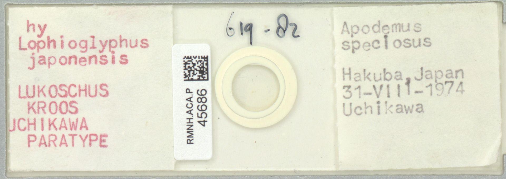 RMNH.ACA.P.45686   Lophioglyphus japonensis Lukoschus, Kroos, Uchikawa