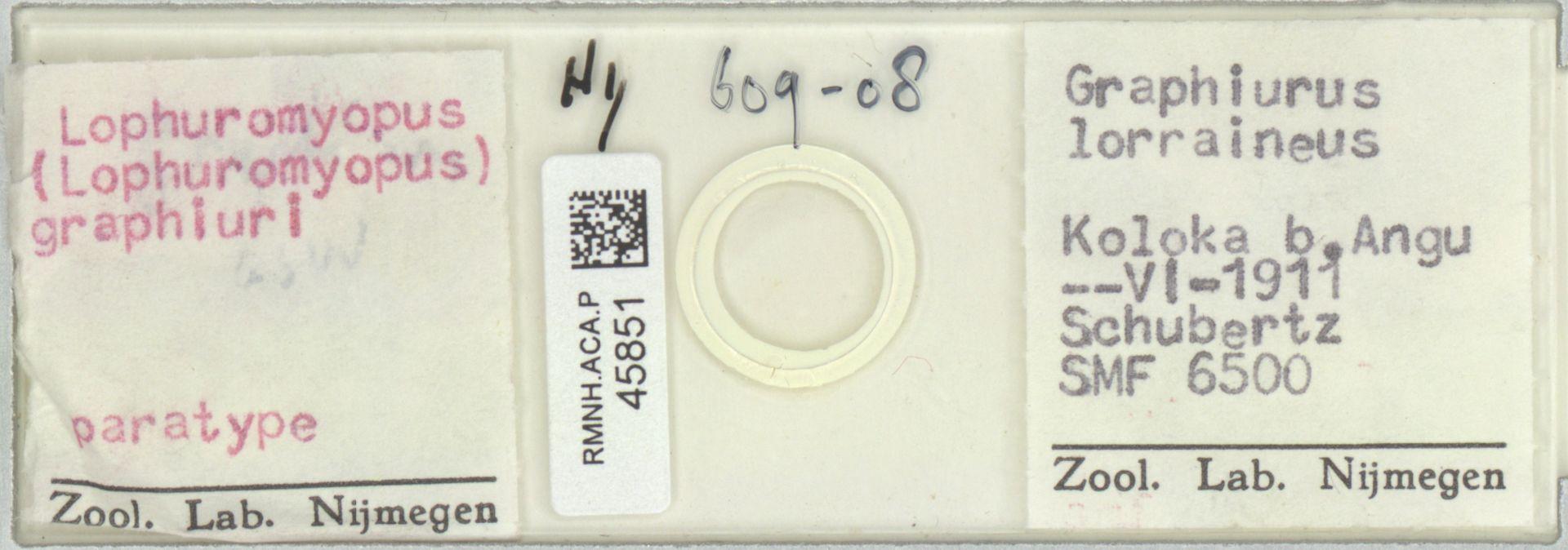 RMNH.ACA.P.45851 | Lophuromyopus (Lophuromyopus) graphiuri