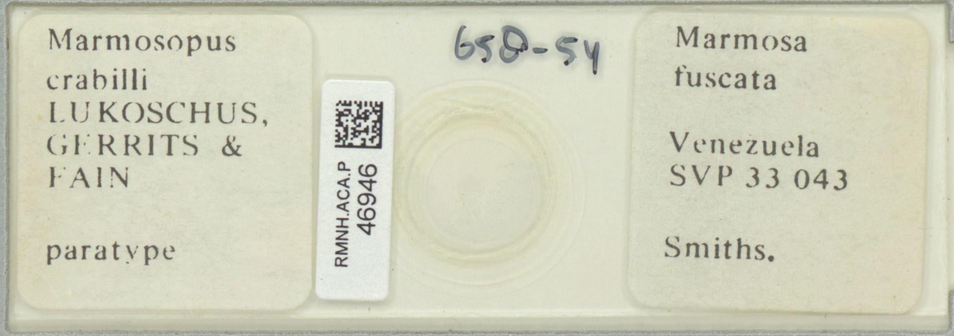 RMNH.ACA.P.46946 | Marmosopus crabilli Lukoschus, Gerrits & Fain