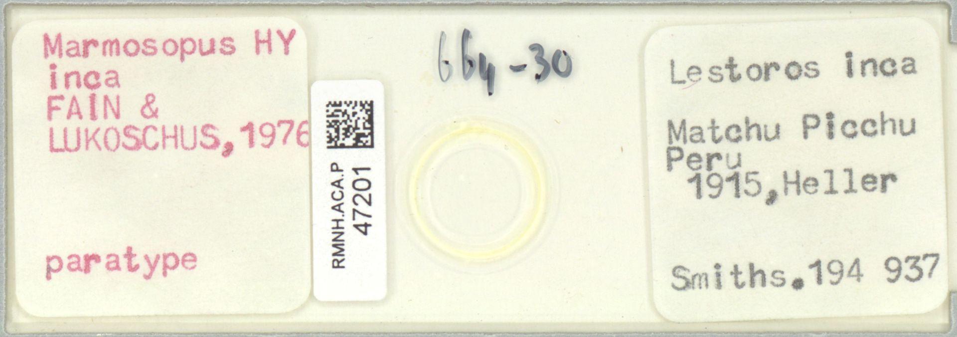 RMNH.ACA.P.47201 | Marmosopus inca FAIN & LUKOSCHUS, 1976