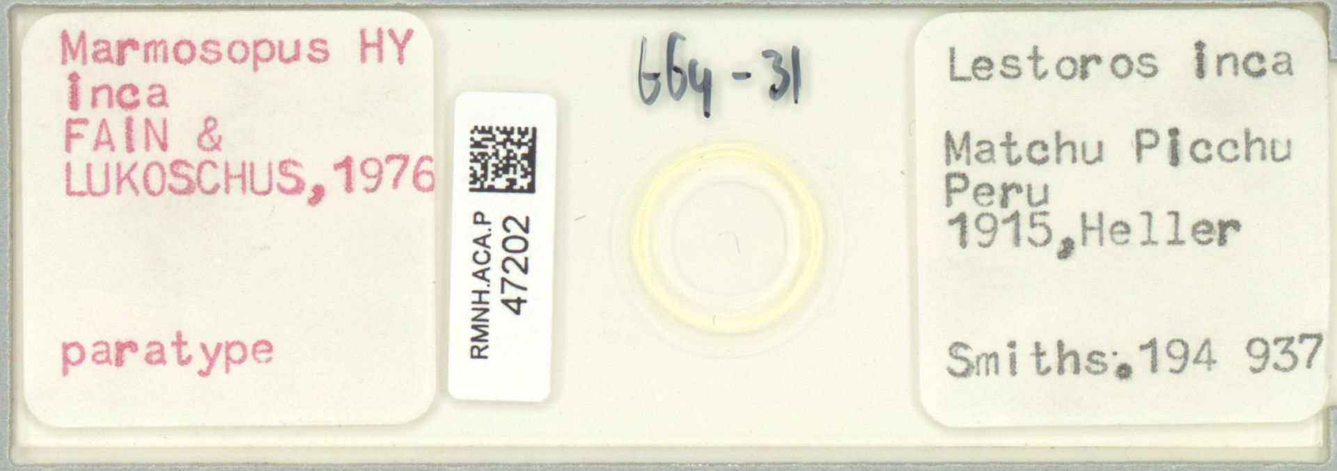 RMNH.ACA.P.47202 | Marmosopus inca FAIN & LUKOSCHUS, 1976