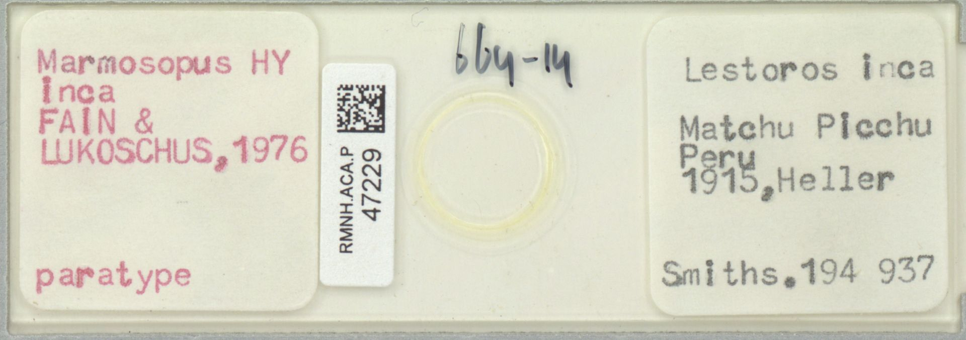 RMNH.ACA.P.47229 | Marmosopus inca Fain & Lukoschus,1976