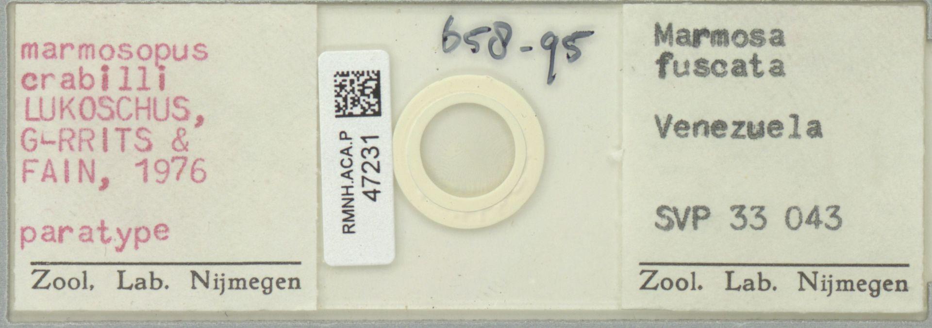 RMNH.ACA.P.47231 | Marmosopus crabilli Lukoschus, Gerrits, Fain 1976