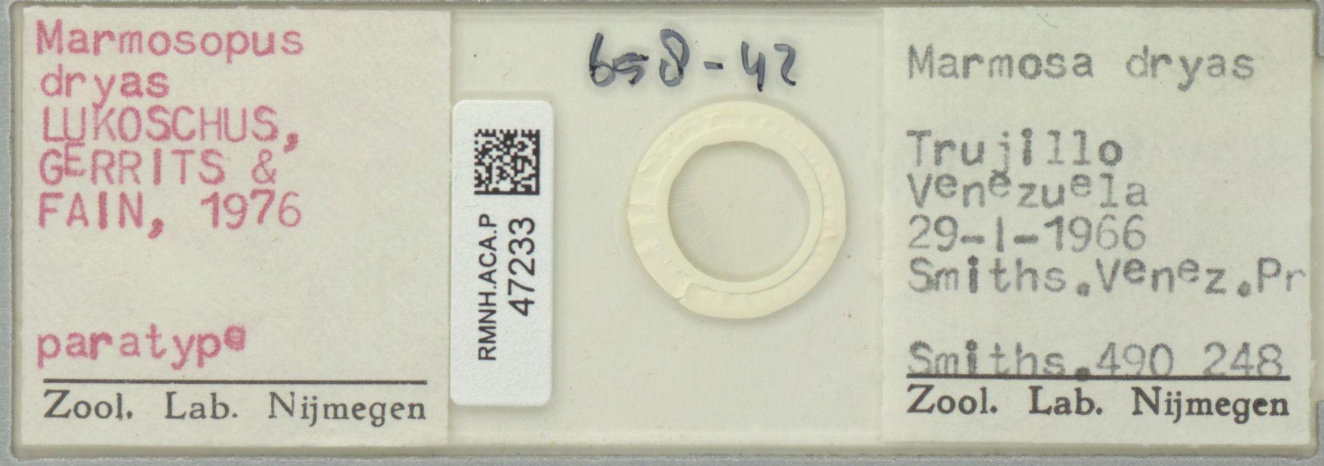 RMNH.ACA.P.47233   Marmosopus dryas Lukoschus, Gerrits & Fain, 1976
