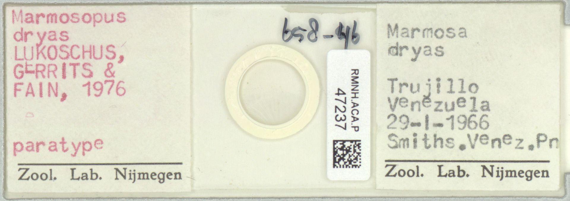 RMNH.ACA.P.47237 | Marmosopus dryas Lukoschus, Gerrits & Fain, 1976
