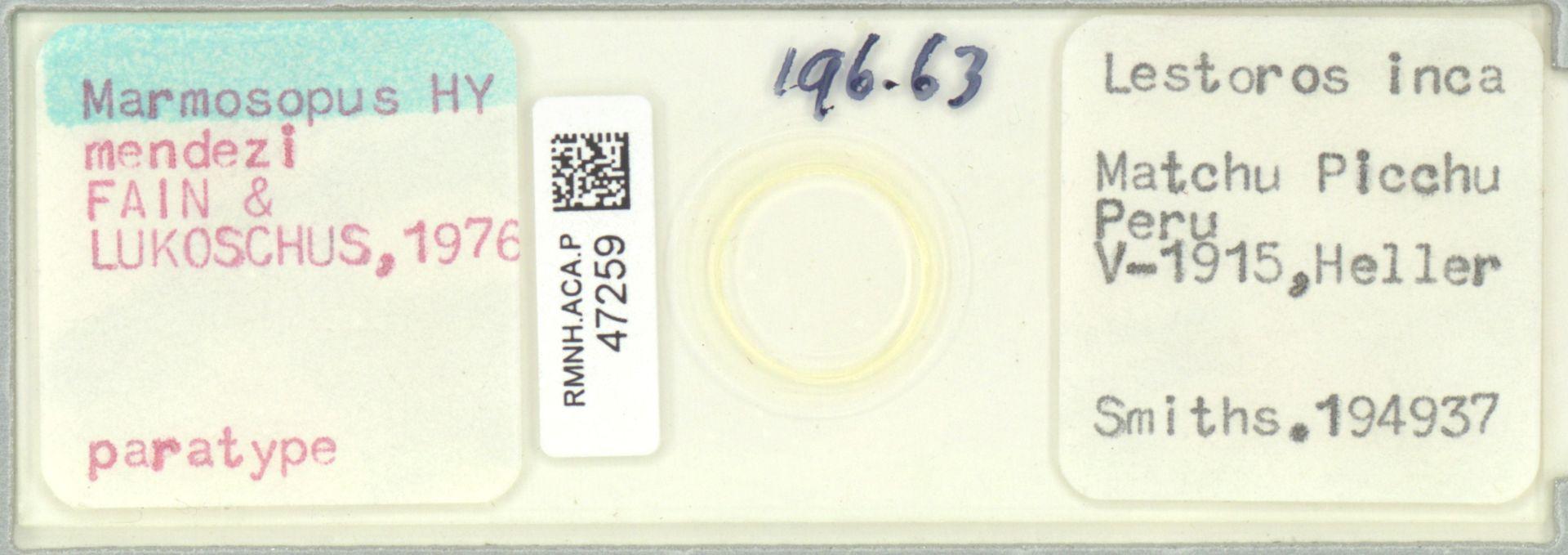 RMNH.ACA.P.47259 | Marmosopus mendezi Fain & Lukoschus,1976