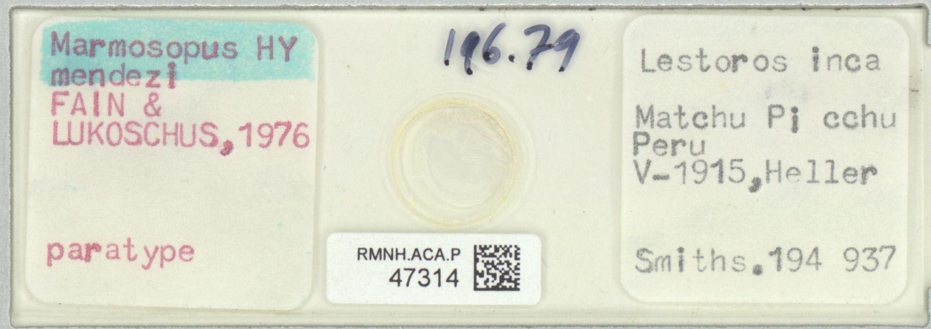 RMNH.ACA.P.47314 | Marmosopus mendezi Fain & Lukoschus,1976