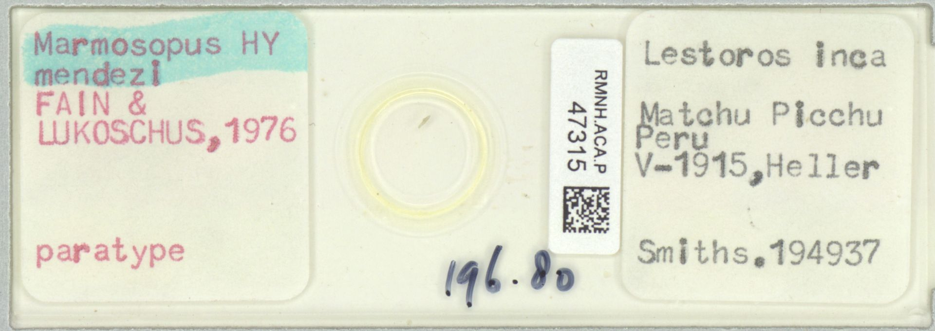 RMNH.ACA.P.47315 | Marmosopus mendezi Fain, Lukoschus 1976
