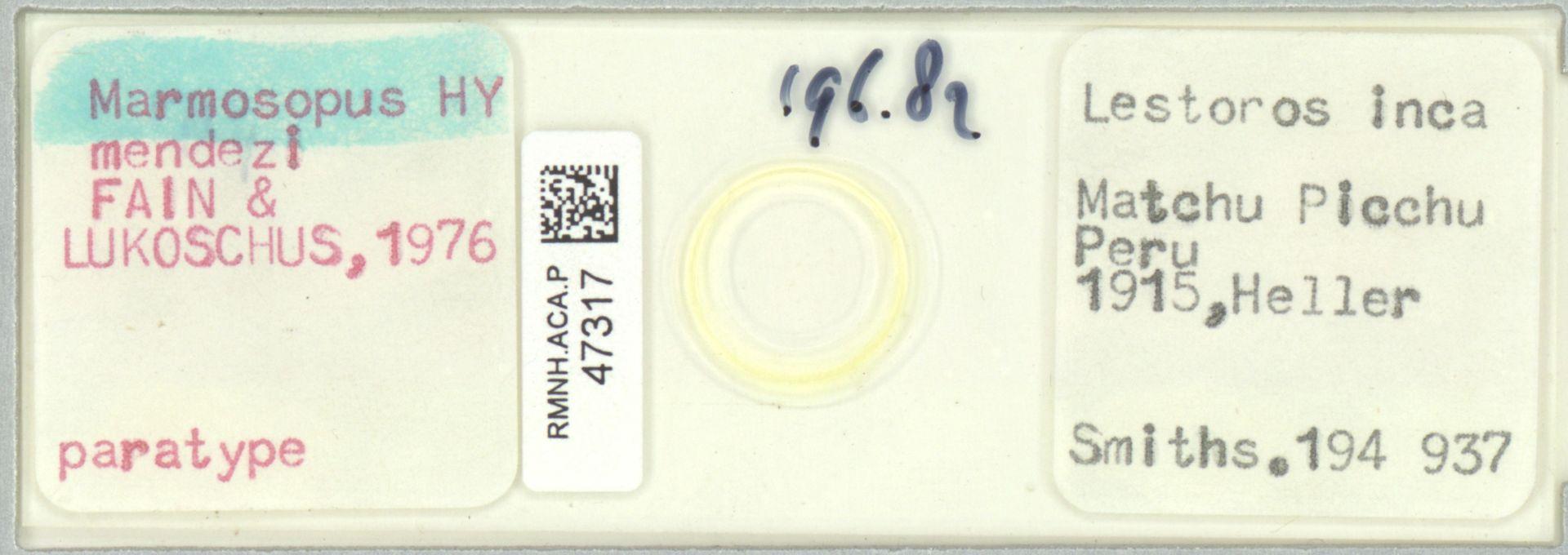 RMNH.ACA.P.47317   Marmosopus mendezi Fain & Lukoschus,1976