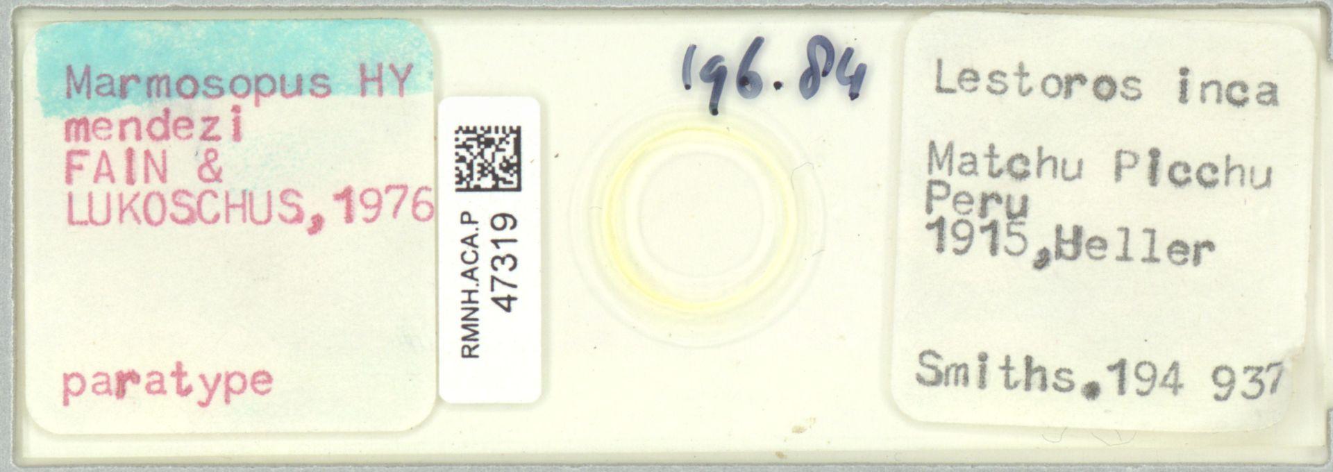 RMNH.ACA.P.47319 | Marmosopus mendezi Fain & Lukoschus 1976