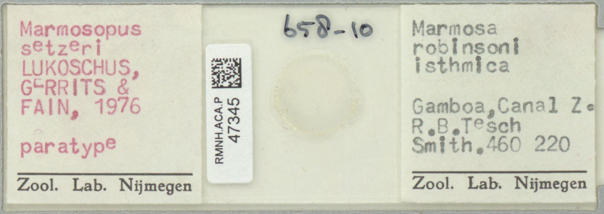 RMNH.ACA.P.47345 | Marmosopus setzeri Lukoschus, Gerrits & Fain, 1976