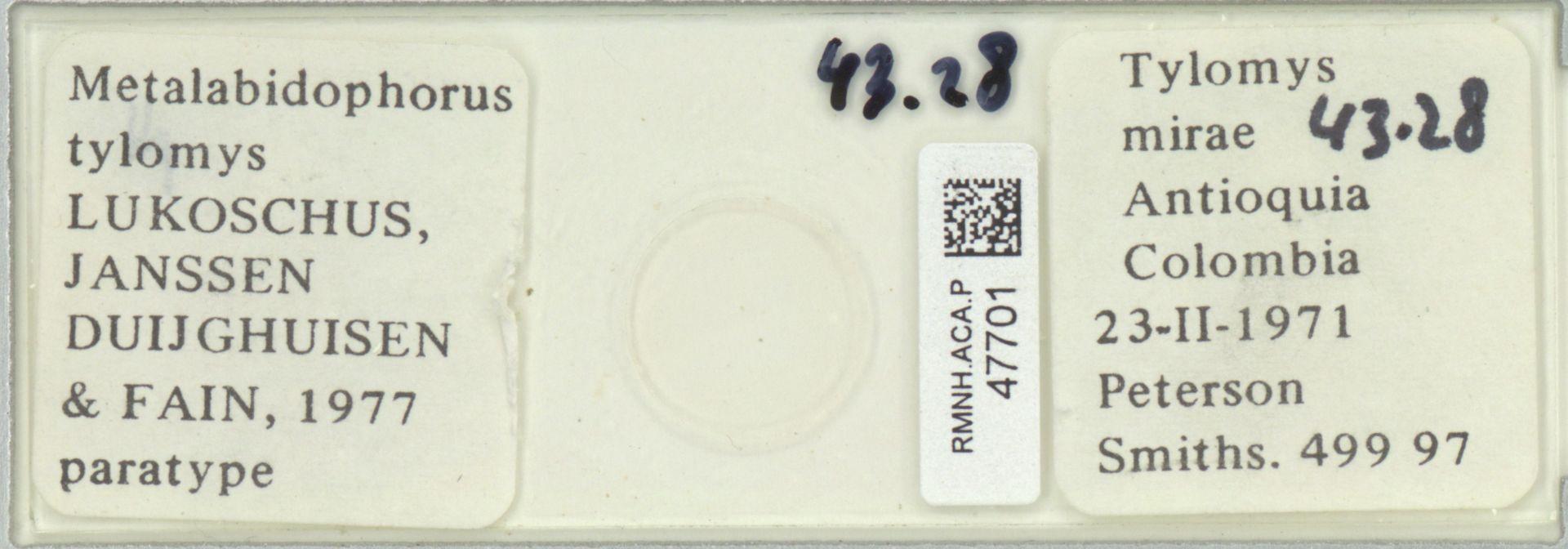RMNH.ACA.P.47701 | Metalabidophorus tylomys Lukoschus, Janssen Duijghuisen & Fain, 1977