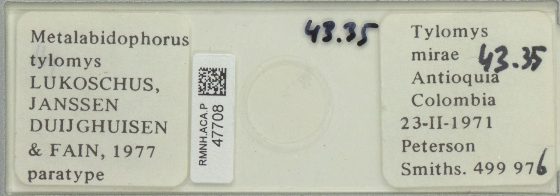 RMNH.ACA.P.47708 | Metalabidophorus tylomys Lukoschus, Janssen Duijghuisen & Fain, 1977