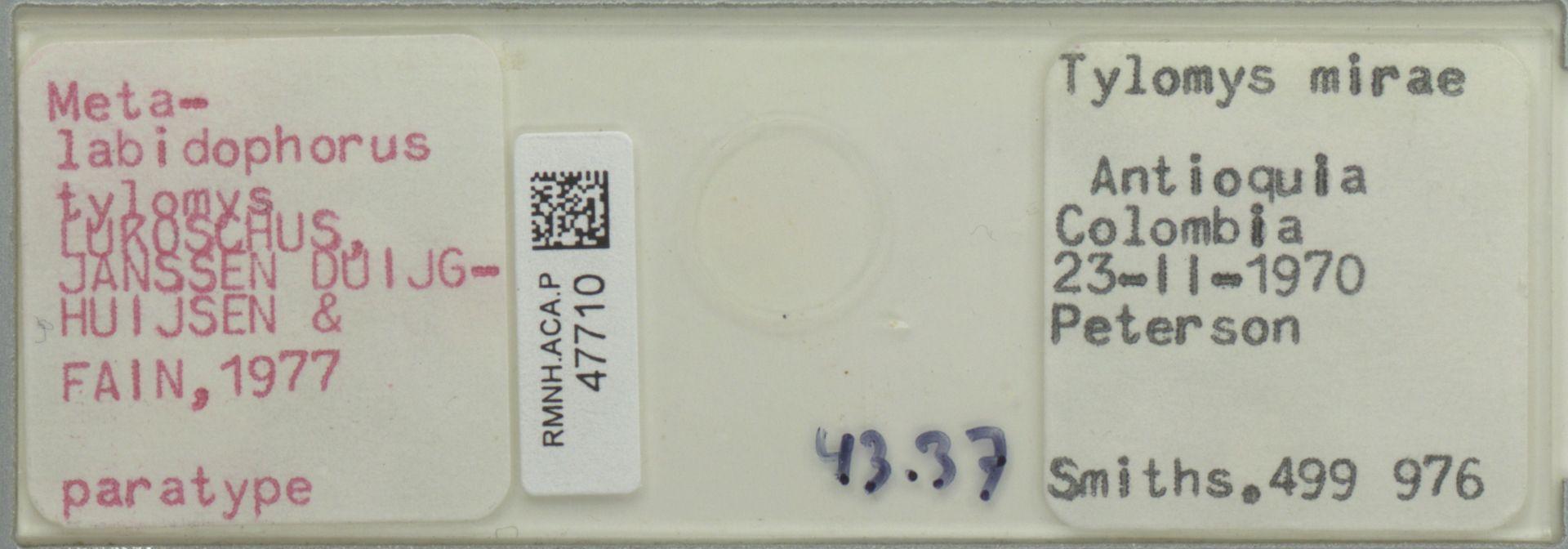 RMNH.ACA.P.47710 | Metalabidophorus tylomys Lukoschus, Janssen Duijghuijzen & Fain, 1977