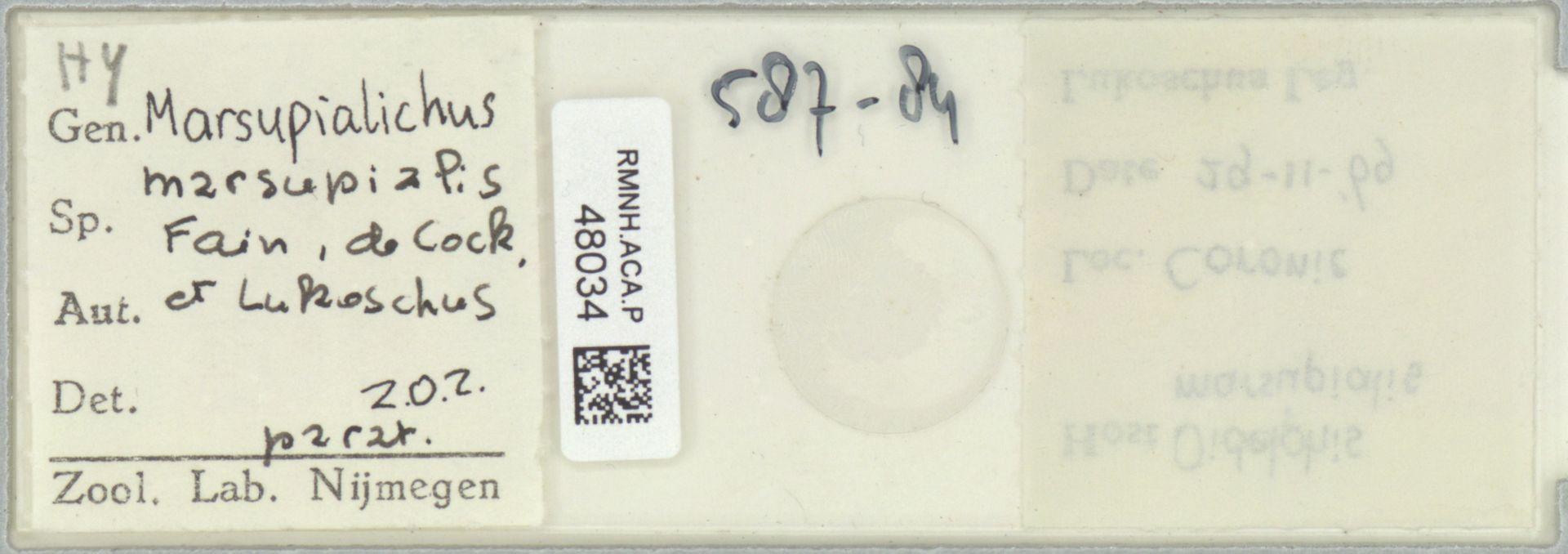 RMNH.ACA.P.48034 | Marsupialichus marsupialis Fain, de Cock & Lukoschus