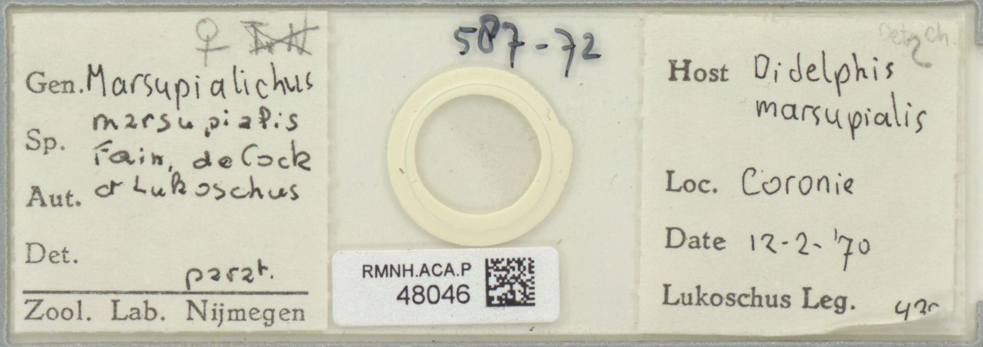 RMNH.ACA.P.48046 | Marsupialichus marsupialis Fain, de Cock & Lukoschus