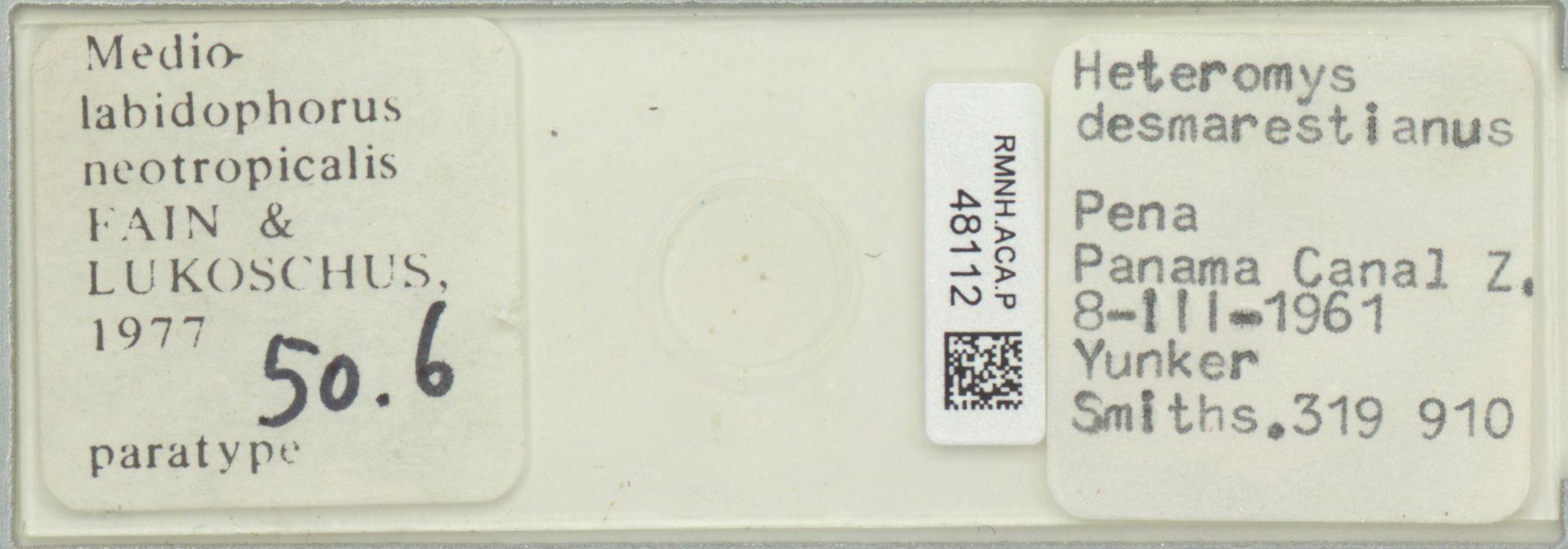 RMNH.ACA.P.48112 | Mediolabidophorus neotropicalis Fain & Lukoschus 1977