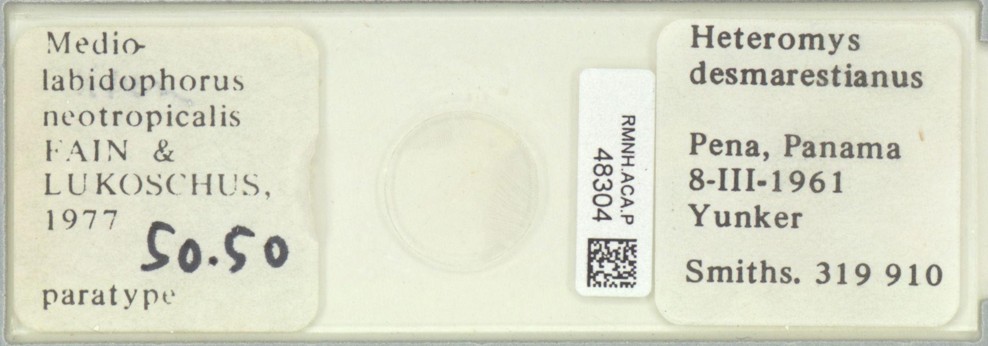 RMNH.ACA.P.48304 | Mediolabidophorus neotropicalis Fain & Lukoschus 1977